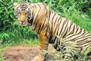 Over 3-44 lakh trees to be cut in Jharkhand's  Palamau Tiger Reserve