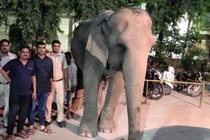Delhi's last elephant Lakshmi, missing for 2 months, rescued