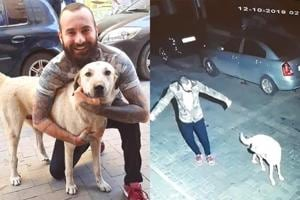 Man dances with stray in middle of road, video makes people happy
