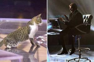 Kaun Banega Crorepati 11 gets cat as 'contestant,' Amitabh Bachchan tweets pics
