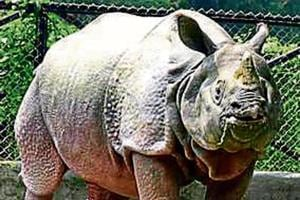 Uttarakhand plans to introduce rhinos in Corbett