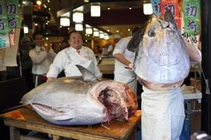 PHOTOS: Japan 'Tuna King' buys new year catch for USD 1.8 million