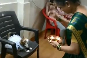 Human dresses cat up, performs aarti- Tiktok video amuses Twitter