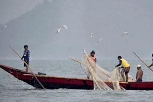 146 dolphins sighted in Chilika lake's annual census, populating new areas