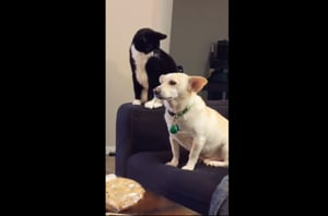 Cat thinks long before hitting dog, what follows will make you LOL- Watch