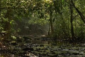 Tropical rainforests combat challenging climate changes