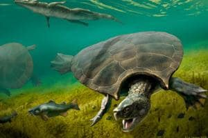 Prehistoric car-sized 'stupendous turtle' was built for battle, weighed over 200 kgs