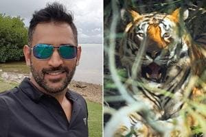Mahendra Singh Dhoni shares pic of big cat, 'tiger meets tiger' say people