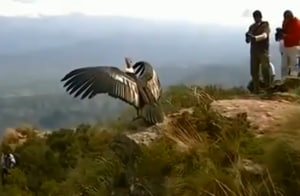 Fact Check: Does video show 'divine bird Jatayu' in Kerala? Here's the truth
