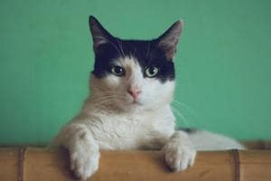 How cat videos could cause a 'climate change nightmare'