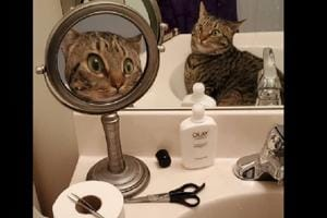 Surprised cat's funny reflection on mirror is cracking netizens up