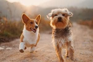 Travelling with canines? Here are some pet-friendly hotels, activities in Santa Monica