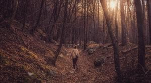 Spending time in nature reduces stress- Here's why