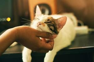 Playing 'cat-specific music' may reduce feline's stress during vet visits- Here's how