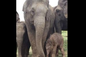 Bannerghatta Biological Park celebrates birth of second calf for Roopa the elephant
