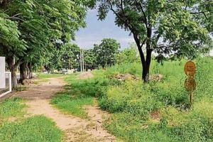 Overgrown trees leave residents concerned in southern sectors
