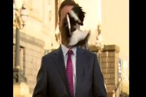 Bird swoops Australian reporter moments before live telecast