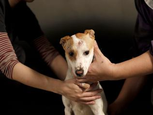 In Delhi, street dogs will now join a security squad, get special training