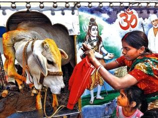 Tree of Hinduism under threat from concerted effort to prune it
