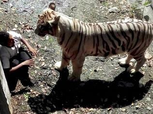 Day after, thousands flock Delhi zoo to see tiger