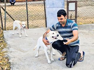 90 police canines to guard Simhastha festival venue in MP