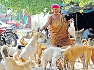Hawker plays mother to 350 abandoned dogs