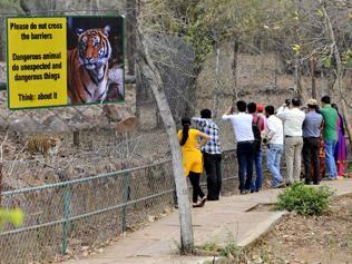 Warning for Bhopal Van Vihar visitors: Don't go near, dangerous animals do dangerous things