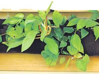 DIY summer decor: Coffee tables that grow, herbs that hang from walls