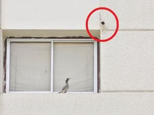 Life in a city: In a first, Hornbill couple found nesting in a concrete cavity in Indore