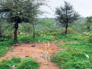 Govt to allow pvt sector to manage 40% of forests
