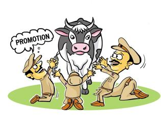 Rohtak cops begin 'mission stray cattle' ro rehabilitate cows