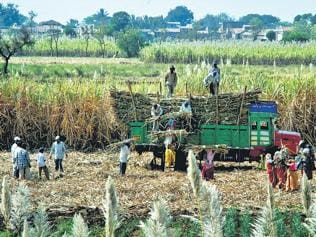 Maharashtra, Punjab top producers of green energy from farm waste