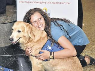 At Mumbai airport, trained therapy dogs to beat travel blues