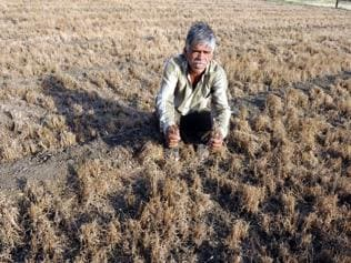 MP facing Rs 22K-cr crop loss due to erratic monsoon