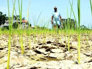 Nearly half of India's districts drought-hit as crisis accelerates