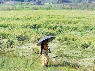 Steady growth of women as farmland owners in a decade