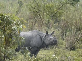 To save Kaziranga rhinos, forest officials are killing villagers