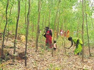 MP: These tribals wish to be called 'slaves' in free India