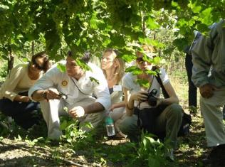 Vintners put village in Madhya Pradesh on global wine map
