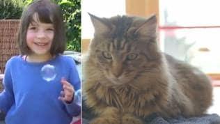 Watch   Heartwarming friendship between a girl and a cat