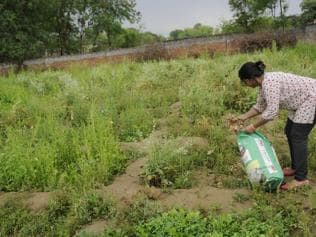 Craving nutrition: How 6 entrepreneurs took to organic farming in Noida