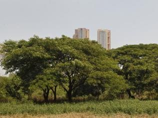 Clear and present danger to Aarey forest: land grab