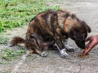 Stray dogs: Why love, responsibility and patience all matter here