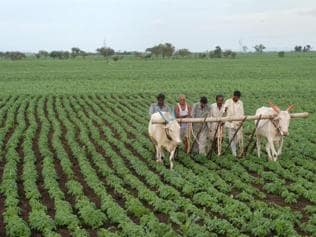 Changing rainfall pattern damaging agriculture in MP