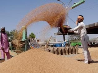 Favourable weather augurs well for wheat quality, say experts