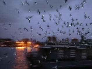 Watch | LED-lit pigeons are illuminating NY skies in fascinating art ex...