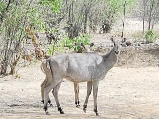 Most hunting proposals cleared without scientific study, reveals RTI