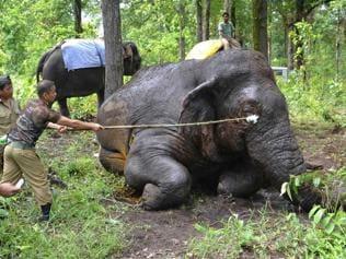 Nepal fence to keep elephants away may escalate into political row