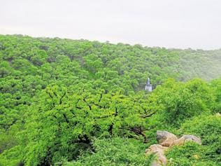 NDA cleared more projects in wildlife habitats in 2 yrs than UPA did in 5 yrs