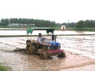 Paddy sowing: Haryana's initiative to save groundwater falls flat